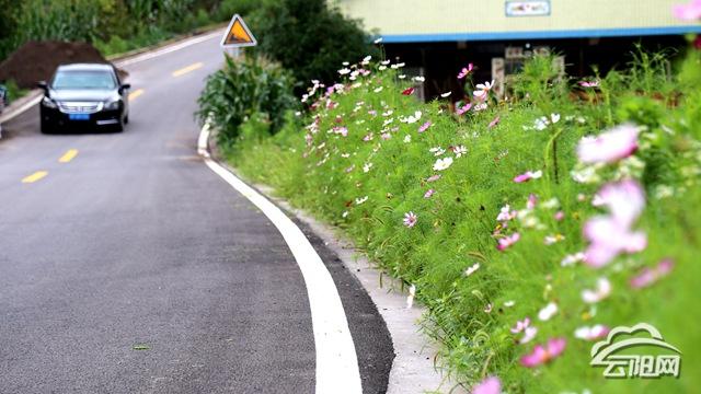 绿化美化盘丁路颜值大提升