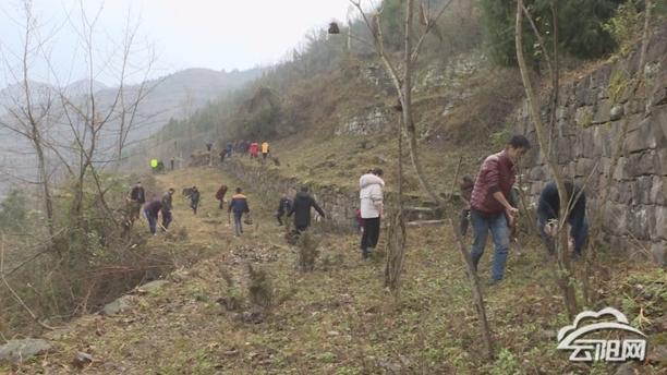 普安乡开展义务植树活动全面推进绿色发展