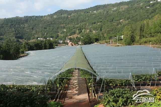 威海.云阳现代农业示范园种植的